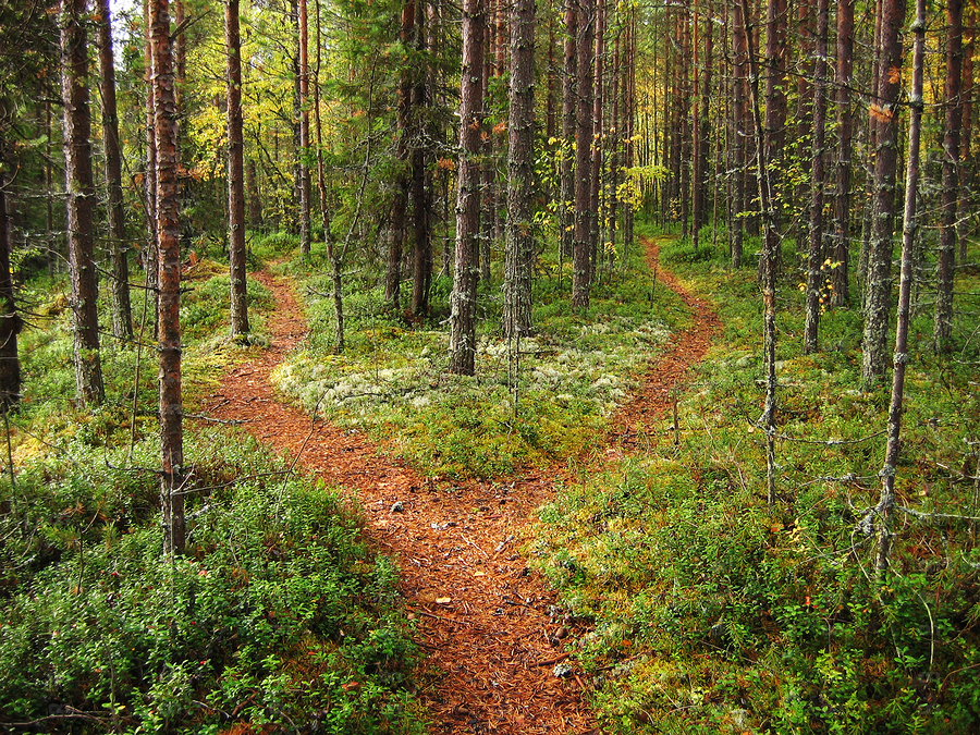 Brown crossroads in the green Karelian forest